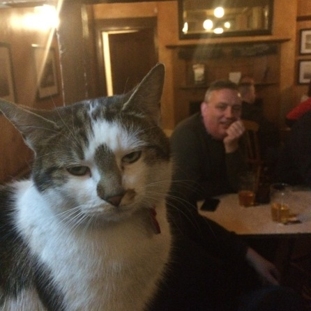 CraigDavid Cat